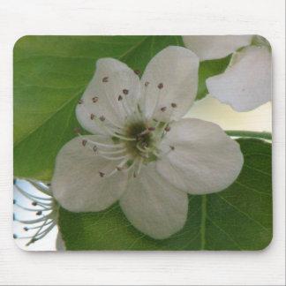 Bradford Pear Tree Bloom Mouse Pad