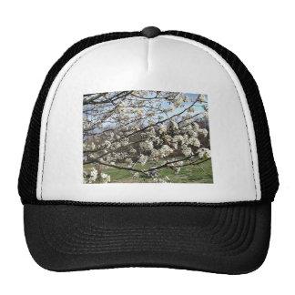 Bradford Pear Tree Blossoms Hat