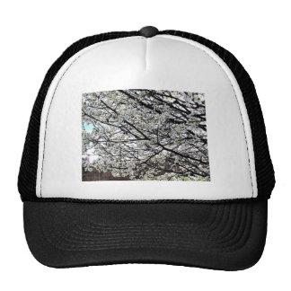 Bradford Pear Tree Blossoms Mesh Hats
