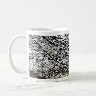 Bradford Pear Tree Blossoms Coffee Mugs