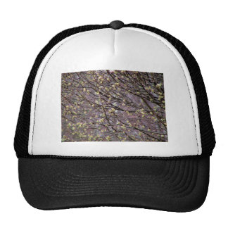 Bradford Pear Tree Buds Hats