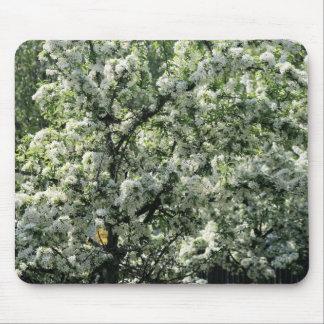 bradford pear tree mouse pad