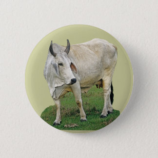 Brahman Cattle 6 Cm Round Badge