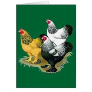 Brahmas Three Roosters Card