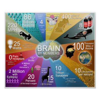Brain By Numbers Poster