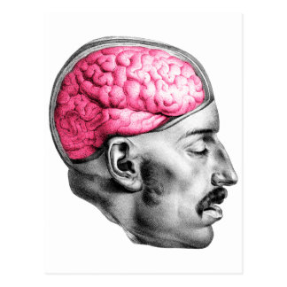 Brains Vintage Medical Illustration Postcard
