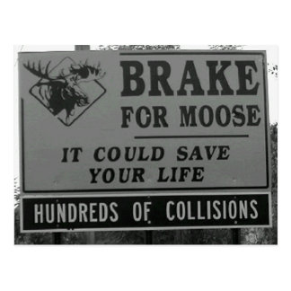 Brake for Moose Postcard