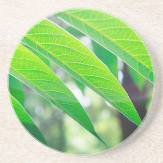 Branch ailanthus with narrow leaves coaster