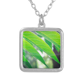 Branch ailanthus with narrow leaves silver plated necklace