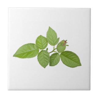 Branch of green leaves tile