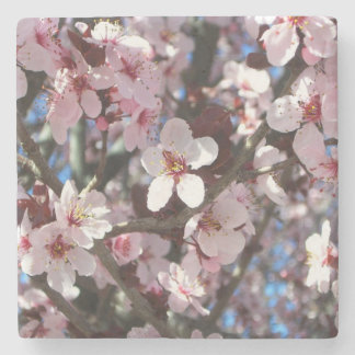 Branch of Pink Blossoms Spring Flowering Tree Stone Coaster