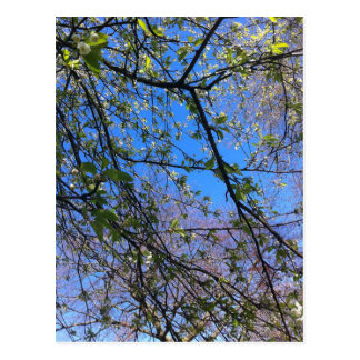 Branches and blue sky postcard