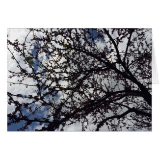 Branches & Blossoms Greeting Card