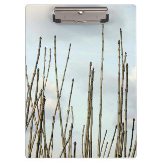 Branches Clipboard