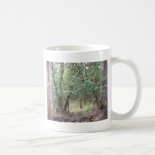 Branches in the Forest Mugs