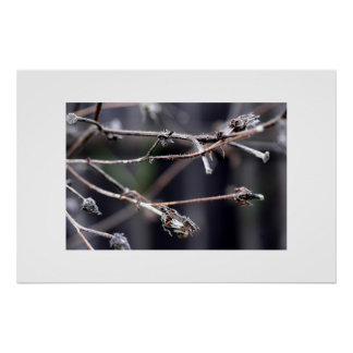 Branches in Winter Poster