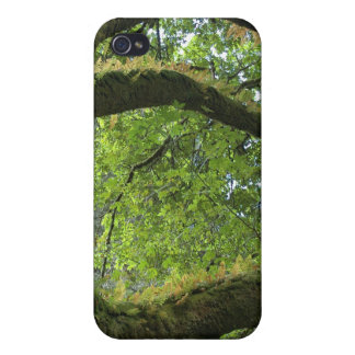 Branches iPhone 4/4S Cases