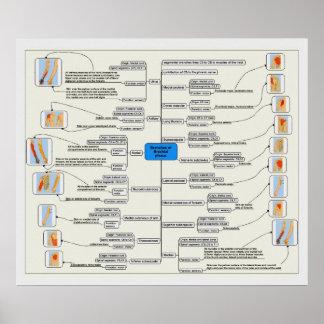 Branches of the Brachial Plexus Nerve System Chart