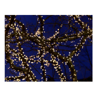 Branches with Christmas lights and a dark blue sky Postcard