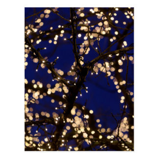 Branches with Christmas lights Postcard