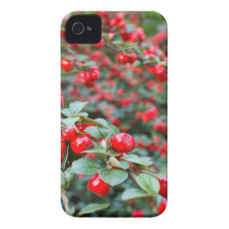 Branches with ripe red cotoneaster berries iPhone 4 Case-Mate case