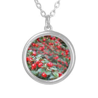 Branches with ripe red cotoneaster berries silver plated necklace