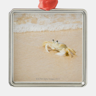 Brazil, Rio de Janeiro, Buzios, Crab on Metal Ornament