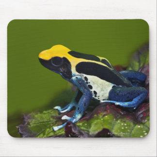 Brazilian Cobalt Dart Frog, Dendrobates Mouse Pad