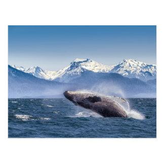 Breaching Humpback Whale In Alaska Postcard