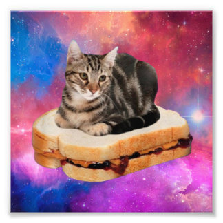 bread cat  - space cat - cats in space photo print