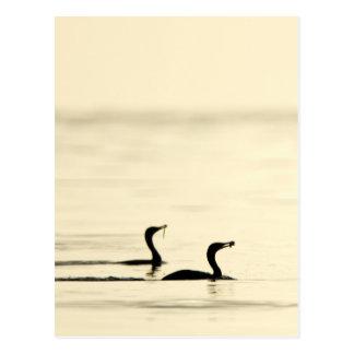 Breakfast Time for Two Cormorants Postcard