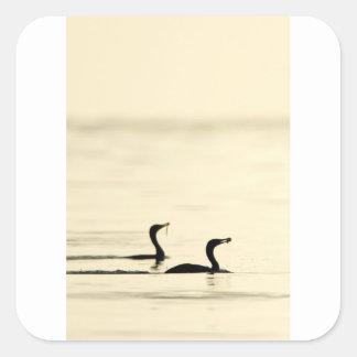 Breakfast Time for Two Cormorants Square Sticker