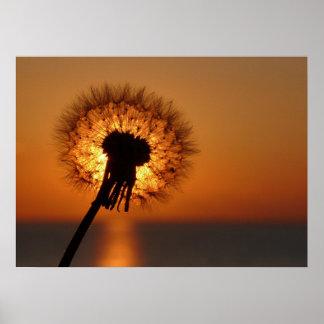 Breath flower/Dandelion Poster