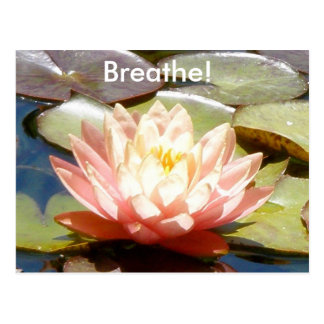 Breathe! Lotus Postcard