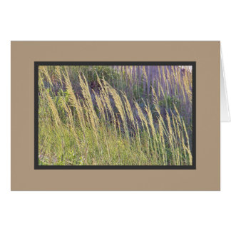 Breezy beach grasses on the Outer Banks Dunes Card