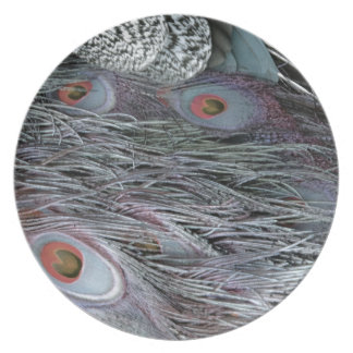 breezy peacock feathers party plates