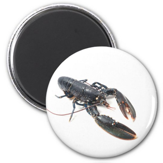 Breton lobster magnet
