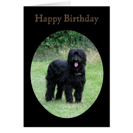 Briard dog happy birthday greetings card