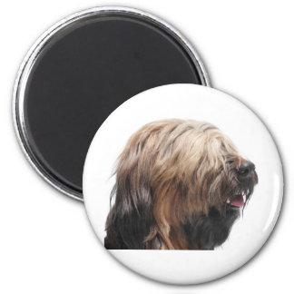 Briard fauve 6 cm round magnet