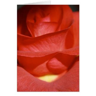 Brick Red Rose Note Card