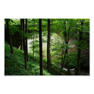 Bridge Arch Green Forest Poster