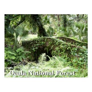 Bridge at Ocala National Forest Florida post card