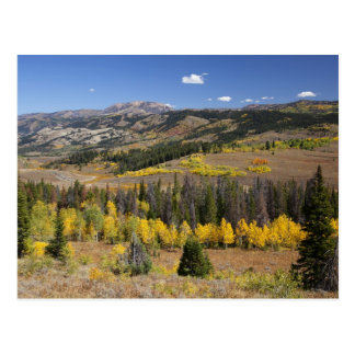 Bridger-Teton National Forest Postcard