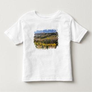 Bridger-Teton National Forest Shirts