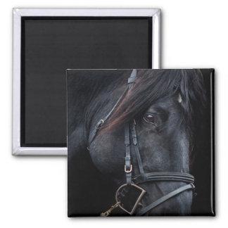 Bridled Black Stallion Face Fridge Magnet