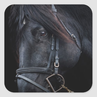 Bridled Black Stallion Face Sticker