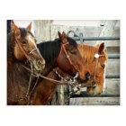 Bridled Horse Heads Postcard