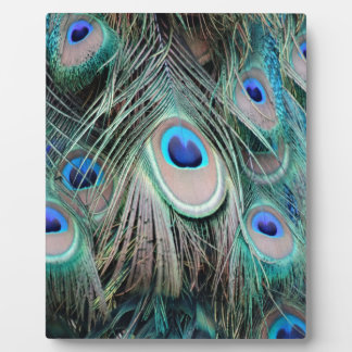Bright And Shiny Peacock Eyes Display Plaques
