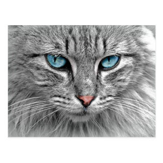 Bright Blue Eyes | Monochrome | Cat Portrait Postcard
