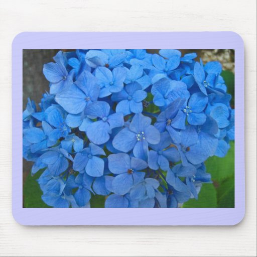 Bright Blue Hydrangea Mouse Pads